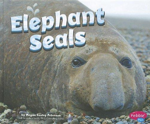 elephant seals - 9