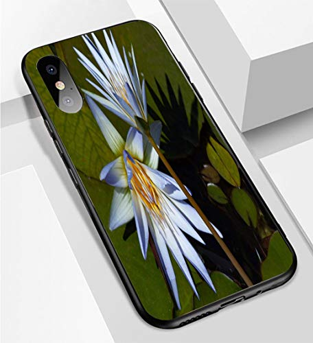 iPhone X/XS Ultra-Thin Phone case Nymphaea nouchali or Nymphaea stellata Also Known as Blue Star Water Lily Aquatic Plants in Brasilias Gardens Anti-Drop Anti-Slip Soft Convenient Protective Shell
