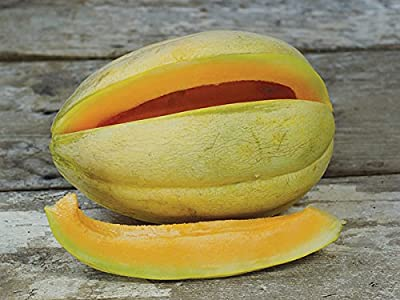 David's Garden Seeds Fruit Melon Old Time Tennessee D52W107P (Orange) 25 Organic Heirloom Seeds