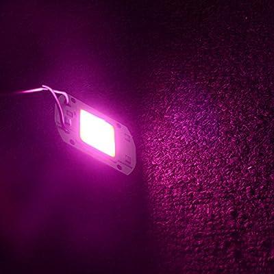Full Spectrum, 110V 30W : 6Pcs LED COB Lamp Grow Flood Light AC110V 220V Full Spectrum 20W 30W 50W LED Plant Flower Lighting DIY Floodlight With IC Driver