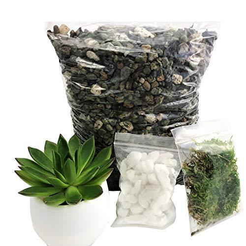 Cactus Soil, Succulent Soil, Cactus and Succulent Soil Potting Mix, Gritty Mix, Succulent Pot (4quart) ()