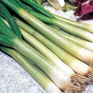 seekay Cebolla blanco Lisboa - Allium cepa Aprox 1000 Semillas - Vegetal