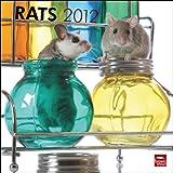 Rats 2012 Square 12X12 Wall Calendar (Multilingual Edition)