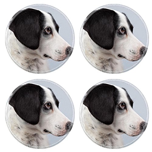 Liili Round Coasters Non-Slip Natural Rubber Desk Pads Mixed breed black and white spotted dog isolated against grey background Light brown eyes Studio portrait I