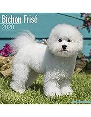 Bichon Frise Calendar 2020