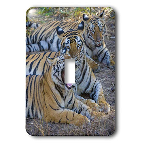 - 3dRose Danita Delimont - Tigers - Bengal tigers, Bandhavgarh National Park, India - 2 plug outlet cover (lsp_312704_6)