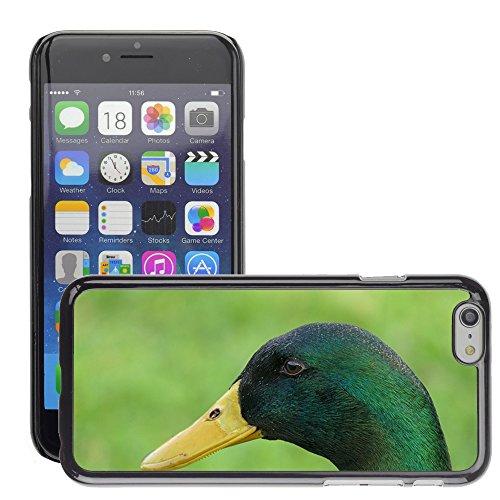 "Just Phone Cases Hard plastica indietro Case Custodie Cover pelle protettiva Per // M00128214 Canard Bill Drake oiseau de plumes des // Apple iPhone 6 PLUS 5.5"""