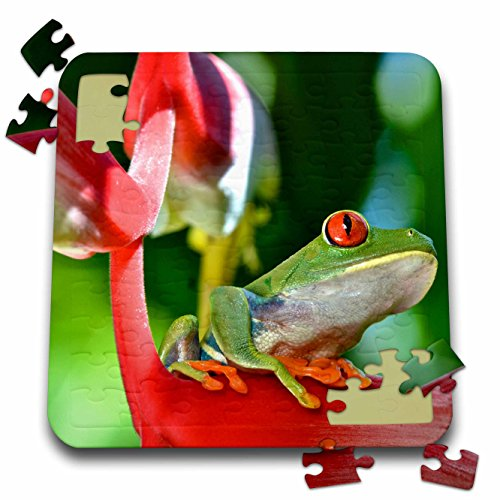 3dRose KIKE CALVO Rainforest Costa Rica Collection  - Profile of a Red-Eyed Leaf Tree Frog - 10x10 Inch Puzzle (pzl_234128_2)