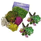 Artificial Succulent Plants | SuperMoss Bundle, Create Unique Decor Garden Arrangements with these Large & Small 14 Colorful Pieces. DIY these unpotted Fake - Faux - cactus in any pot or terrarium.