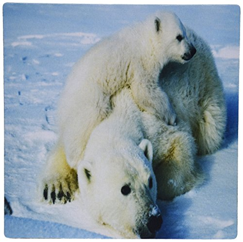 Playful Polar Bear (3dRose LLC 8 x 8 x 0.25 Inches Mouse Pad, Playful Polar Bear N Her Mom Jpg (mp_98619_1))