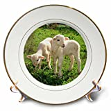 3dRose cp_17656_1 Farm Animals Lambs-Porcelain Plate, 8''