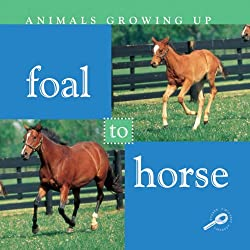 Foal to Horse