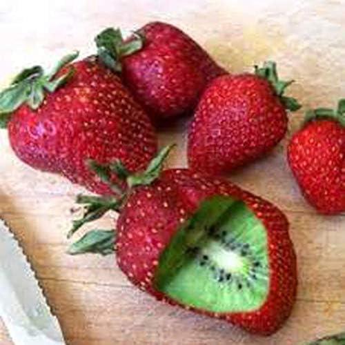 AIMADO Samenhaus-Rarität 50 Stück Erdbeere kiwi samen F1 Winterharte Kletterpflanze Bio Obst Saatgut,exotische samen für Garten, Balkon,Terrasse