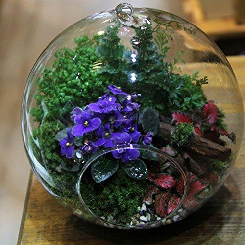 vase suspendu en verre transparent boule pour plantes. Black Bedroom Furniture Sets. Home Design Ideas