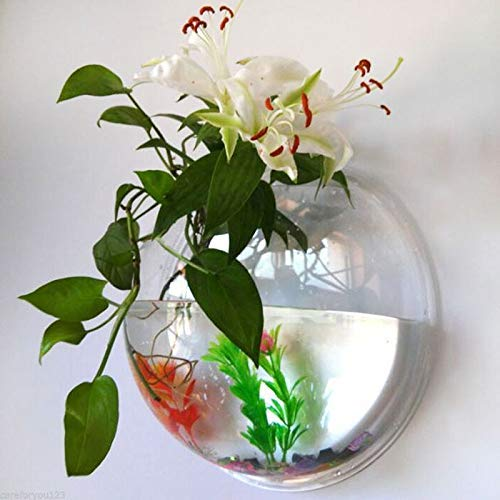 """7"""" Wall Mount Hanging Glass Fish Aquarium Bowl for Small Fighter / Betta Fish & Money Plant for Home Decor – Central…"""