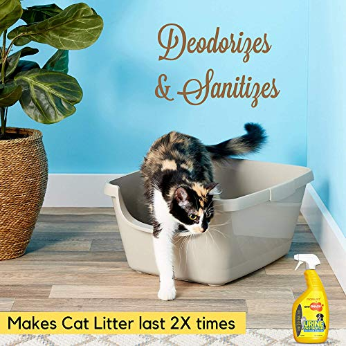 ROBUST Odosmash | Urine Destroyer | Pet Stain and Odor Remover | Natural Bio-Enzymatic Formula | Cat Litter Spray | All Pets | All Surfaces | Fresh Citrus Fragrance | 500 ml