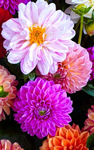 """Notebook: dahlia blossom bloom flowers nature flora 5"""" x 8"""" 150 Ruled Pages by Wild Pages Press"""