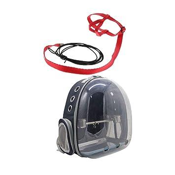 B Blesiya Transportadora de Pajaros Transparente + Cuerda de ...