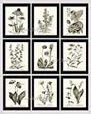pitcher frame set - Botanical Print Set of 9 Prints Unframed Antique Coneflower Echinacea Foxglove Water Lily Lotus Bellflower Pitcher Plant Aster Lady's Slipper Moccasin Dandelion Lily of The Valley Wall Art MFS