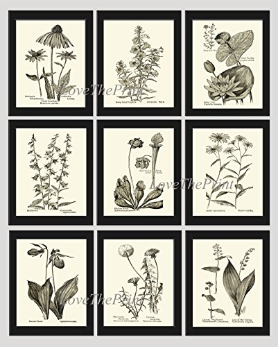 Botanical Print Set of 9 Prints Unframed Antique Coneflower Echinacea Foxglove Water Lily Lotus Bellflower Pitcher Plant Aster Lady's Slipper Moccasin Dandelion Lily of The Valley Wall Art MFS ()