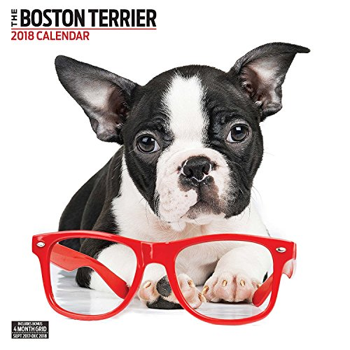 Boston Terrier 2018 Contemporary Wall Calendar
