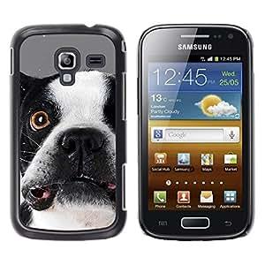 TopCaseStore / la caja del caucho duro de la cubierta de protección de la piel - Boston Terrier Goofy Dog Canine - Samsung Galaxy Ace 2 I8160 Ace II X S7560M