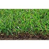 Organic Seeds: Centipede Grass Seed- 1# Bulk Pounds- Coated Seed- No Mulch by Farmerly