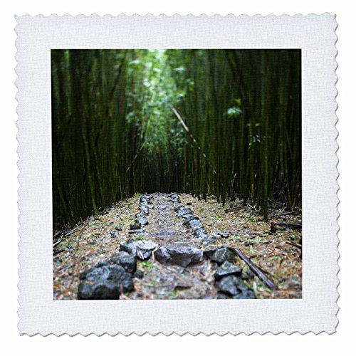 3dRose qs_89188_1 Flora, Bamboo Forest, Pipiwai Trail, Haleakala Maui-Us10 Jgs0019-Jim Goldstein-Quilt Square, 10 by 10-Inch (Pipiwai Trail)