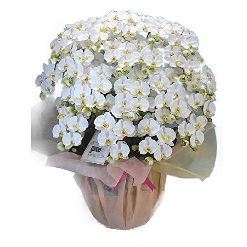【光触媒】【造花】胡蝶蘭 大輪 白 M 20本立ち B00LHRJC4A