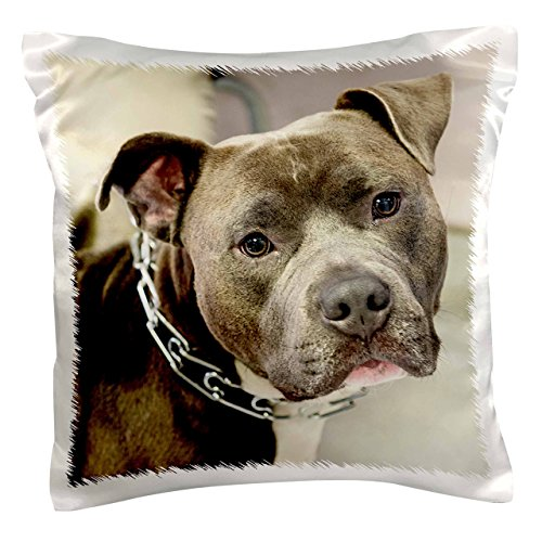 3dRose pc 173653 1 Chain Collar Pillow