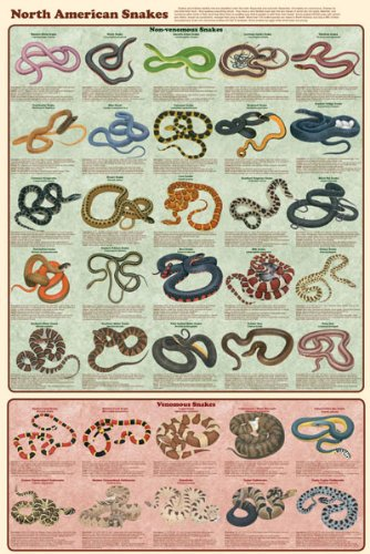 north-american-snakes-educational-chart-poster-24-x-36