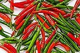 90 Hot Pepper Seeds (Herb Seeds), Organic Heirloom Chili Seed, Chilli Pepper Seeds, Thai Organic Bird Chilli (Non GMO), Thai Hot Pepper Chili, Thai Bird Pepper, Garden Plant Seeds Flowers.