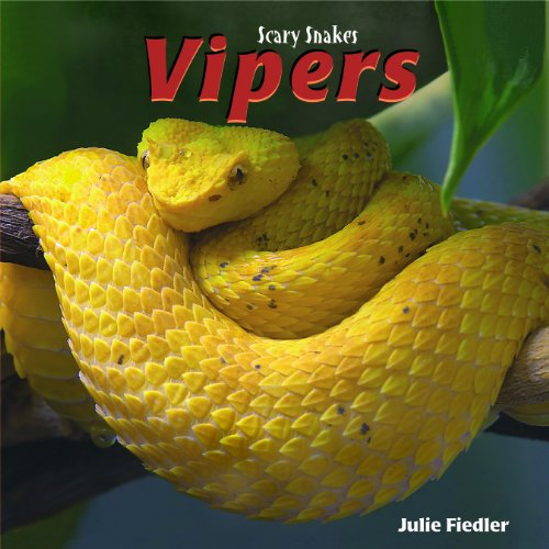 Vipers (Scary Snakes)