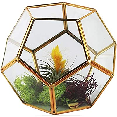 """Circleware 03506 Terraria Terrarium Clear-Glass Metal Frame Design Home Plant Decor Flower Balcony Display Box and Best Selling Garden Gifts, 7.09"""" x 5.5"""", Geometric-Gold-7.09x5.5: Kitchen & Dining"""