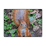 INGBAGS Super Soft Modern Squirrel Area Rugs Living Room Carpet Bedroom Rug for Children Play Solid Home Decorator Floor Rug and Carpets 80x 58 Inch For Sale