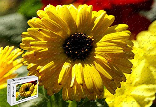 (PigBangbang,20.6 X 15.1 Inch,Intellective Games Basswood Jigsaw Puzzle with Glue - Yellow Calendula Pot Marigold - 500 Piece Jigsaw Puzzle )