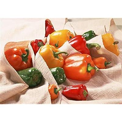 100 Bonsai Garden Plants Pepper Bonsai Home Bonsai Giant Chili Vegetables Happy Farm New Spices Spicy