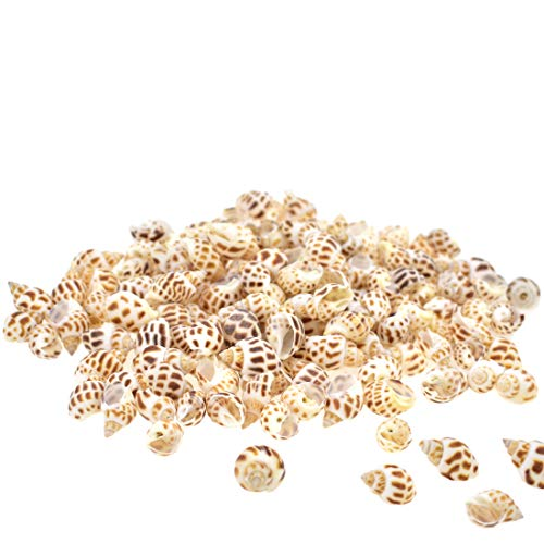 MWOnline Spiral Sea Shell Snail Trumpet Scallop Clam Seashell for Crafts Jewelry DIY Fish Tank Vase Filler Candle Making Ocean Beach Theme Party Décor 150Pcs(Spotted) (Scallop Small Shell)