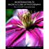 An Introduction To Macro And Close-Up Photography: Part Of The DSLR Fundamentals Series