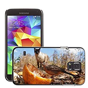 Super Stella Slim PC Hard Case Cover Skin Armor Shell Protection // M00149277 Prey Hunt Bird Sparrow Nature Cat // Samsung Galaxy S5 S V SV i9600 (Not Fits S5 ACTIVE)