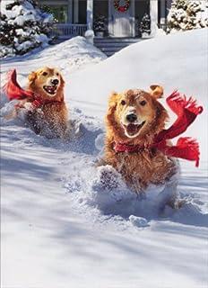 Amazon.com: 12 Christmas cards: Golden retriever family going for ...