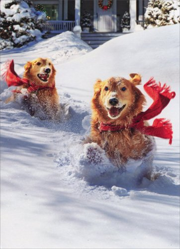 Golden Retrievers In Snow - Dog Box of 10 Avanti Funny Christmas Cards