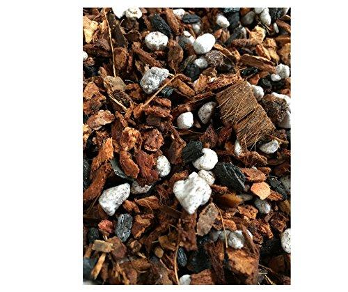 Potting Soil Seedlings - 1