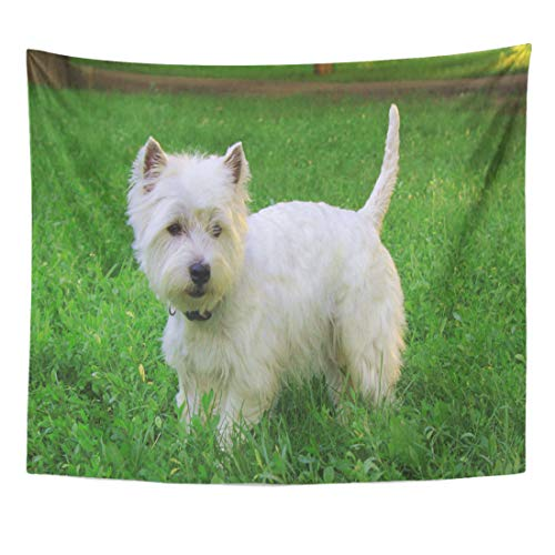 Semtomn Tapestry Animal West Highland White Terrier Westie Dog Female Home Decor Wall Hanging for Living Room Bedroom Dorm 60x80 Inches