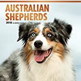 Australian Shepherds 2018 12 x 12 Inch Monthly Square Wall Calendar with Foil Stamped Cover, Animals Dog Breeds (Multilingual Edition)