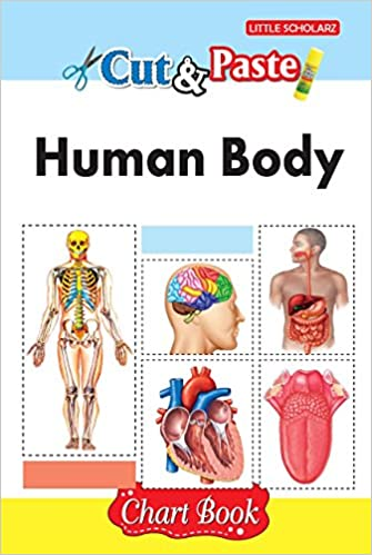 Amazon.in: Buy Cut & Paste - Human Body (Chart Book) Book Online at ...
