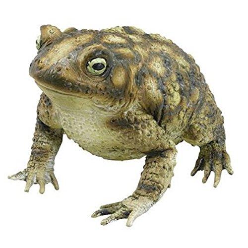 Foam Toad w/Warts (Standard)
