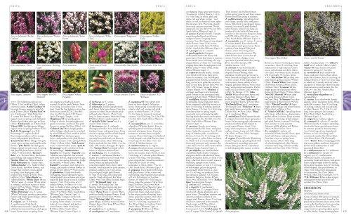 RHS A-Z Encyclopedia of Garden Plants - YouTube