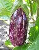 Aubergine (Violett-Gestreift) 10 Samen