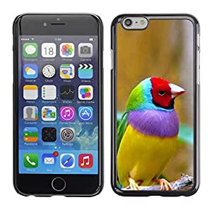 A-type Arte & diseño plástico duro Fundas Cover Cubre Hard Case Cover para Apple (5.5 inches!!!) iPhone 6+ Plus / 6S+ Plus (Tropical Colorful Bird Ornithology Yellow)